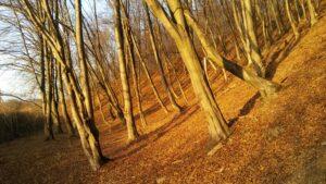 Pijany las - charakterystyczne zjawisko osuwiskowe